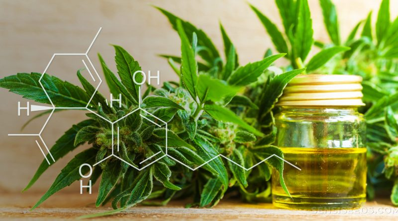 Is It Possible to Use CBD Oil for Treating Arthritis Pain?