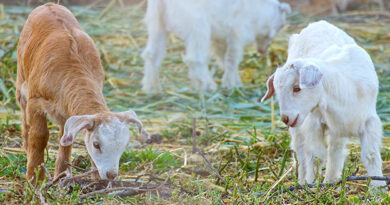 How To Care for Ranch Animals